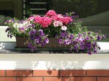 Flowerpot sur le parapet Images libres de droits