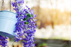 Flowerpot. Vibrant color flowers in the flowerpot selective focus royalty free stock photo