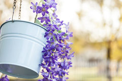 Flowerpot. Vibrant color flowers in the flowerpot selective focus stock photo