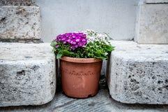 Flowerpot voll der Blumen Stockfoto