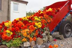 Flowerpot on a wagon. In the backyard stock photos