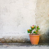 A flowerpot Royalty Free Stock Images