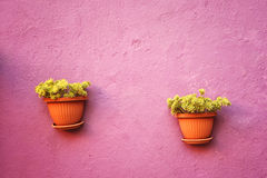 Flowerpot wall Stock Photo