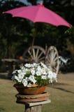 Flowerpot. The white flower in a flowerpot Stock Photo
