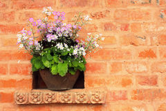 Flowerpot with white and lilac flowers Stock Photography
