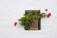 Flowerpot in a window. Royalty Free Stock Image