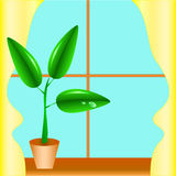 Flowerpot on a window sill Stock Photography