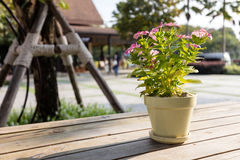 Flowerpot on wooden table Royalty Free Stock Image