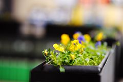 Flowerpot with yellow flowers. In outdoor cafe stock photography