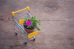 Flowerpot in yellow mini shopping cart or supermarket trolley set on wooden floor in vintage style. Stock Images