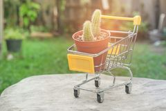 Flowerpot in yellow mini shopping cart or supermarket trolley set on wooden floor in vintage style. Royalty Free Stock Photos