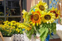 Flowerpot with yellow sunflowers on table near house. Flowerpot with yellow sunflowers. Potted bright natural floral bouquet in vase on table. Beautiful flowers stock photo