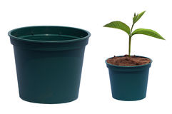 Flowerpot and young plant Stock Images