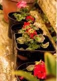 Flowerpots 1 Lizenzfreie Stockfotos