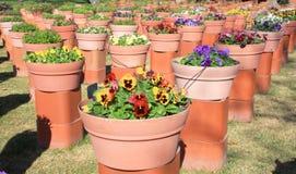 flowerpots Fotografia Royalty Free