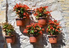 Flowerpots. Stock Photo