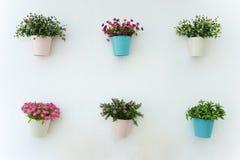 Flowerpots Stockbilder