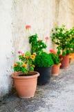 Flowerpots Στοκ εικόνες με δικαίωμα ελεύθερης χρήσης