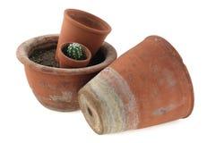 Flowerpots Foto de Stock Royalty Free