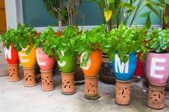 flowerpots Lizenzfreie Stockfotos