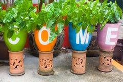 flowerpots Lizenzfreies Stockbild