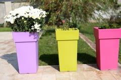 Flowerpots Obrazy Stock