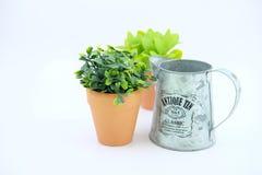 flowerpots Stockbild