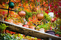 Flowerpots. Of differen colours, with different plants, fresh autumn colours Stock Photo