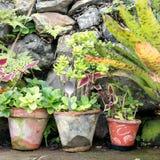 Flowerpots Zdjęcie Royalty Free