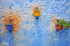 Flowerpots on the blue wall Stock Photography