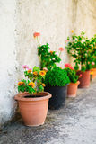 Flowerpots Royalty Free Stock Images