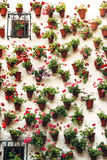 Flowerpots and colorful flower on a white wall, in Cordoba, Spai Royalty Free Stock Photo