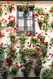 Flowerpots and colorful flower on a white wall, in Cordoba, Spai Royalty Free Stock Images