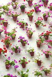 Flowerpots and colorful flower on a white wall, Old European to stock image