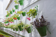 Flowerpots. In courtyards, with white wall Royalty Free Stock Image