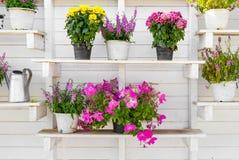 Flowerpots display on shelve Stock Photo