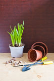 Flowerpots e ferramentas de jardim Imagem de Stock