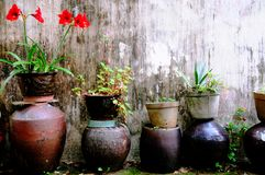 Flowerpots e piante del giardino Fotografia Stock Libera da Diritti