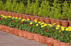 Flowerpots  with flowers and bushes in asia Royalty Free Stock Photo
