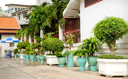 Flowerpots with flowers and the facade of an old house, Bangkok, Thailand. Flowerpots with different flowers and the facade of an old house, Bangkok, Thailand Royalty Free Stock Photography