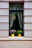 Beautiful window with curtains and flowerpots with flowers on the windowsill royalty free stock image