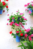 Flowerpots with geranium Stock Images