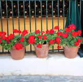 Flowerpots with geranium Royalty Free Stock Image