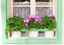 Flowerpots with geranium Royalty Free Stock Photo