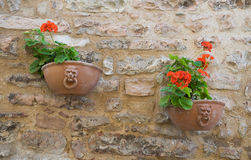 Flowerpots hanging on brickwall. Spello. Umbria. Royalty Free Stock Photography