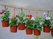 Flowerpots Hanging on Line Royalty Free Stock Images