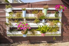 Flowerpots hanging from a pallet on the wall Royalty Free Stock Photos