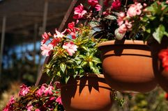 Flowerpots with Impatiens flowers Royalty Free Stock Photography
