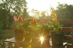 Flowerpots jeziorem Obrazy Stock
