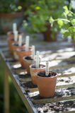 Flowerpots With Labels Of Savings In Greenhouse Royalty Free Stock Image